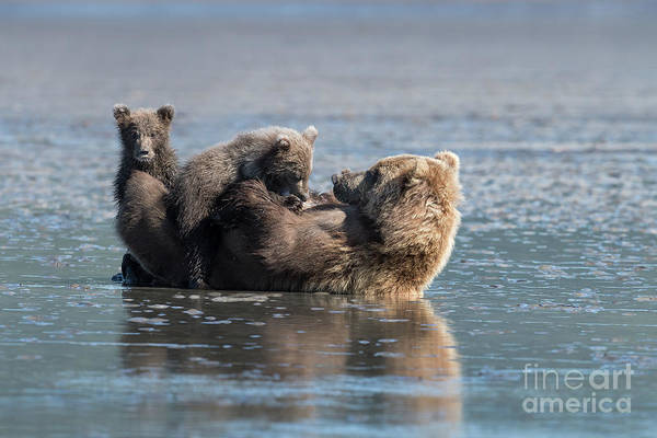 Wall Art - Photograph - Mother's Love by Sandra Bronstein