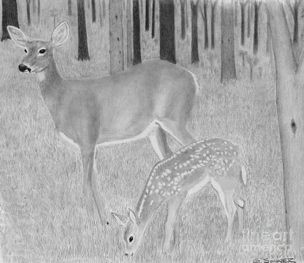 Whitetail Drawing - Mothers Watch by George Sonner