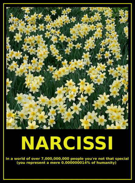 Photograph - Motivational Irony - Narcissi Perspective by Richard Reeve