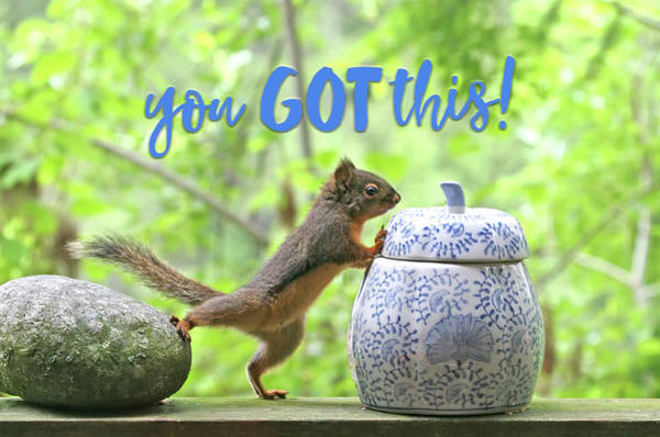Photograph - Motivational Squirrel - You Got This by Peggy Collins