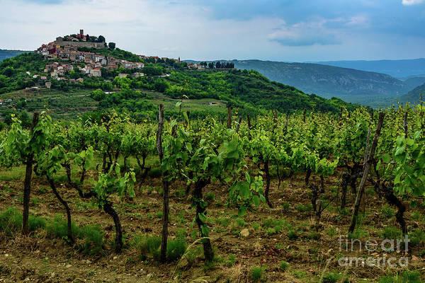 Motovun And Vineyards - Istrian Hill Town, Croatia Art Print