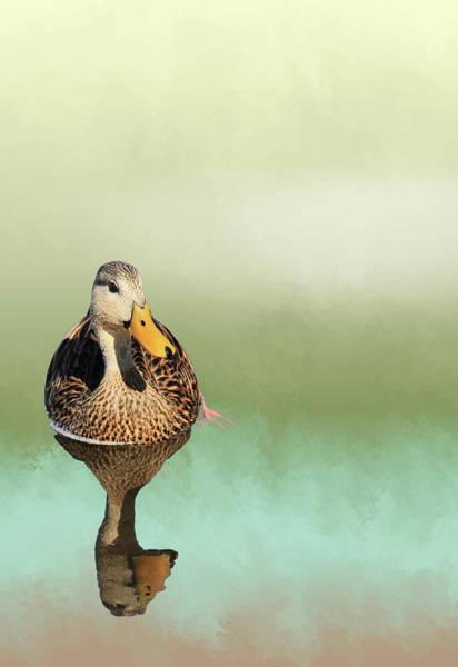 Mottled Mixed Media - Mottled Duck Reflection by Rosalie Scanlon
