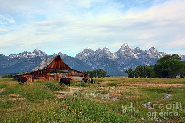 Photograph - Moulton Barn by Teresa Zieba