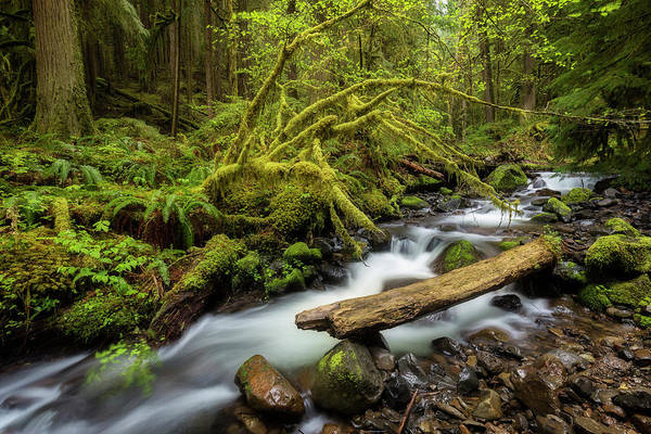 Photograph - Mount Hood Creek by Jon Ares