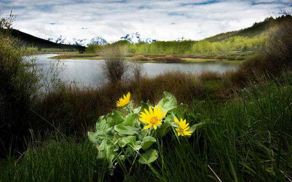 Photograph - Mount Moran Spring by Norman Hall