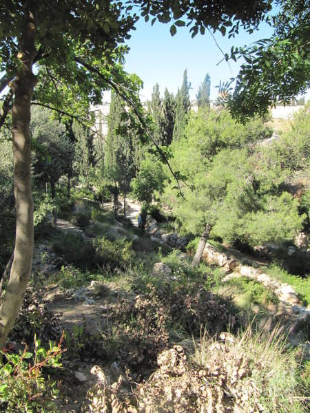 Photograph - Mount Of Olives Paths by Donna L Munro