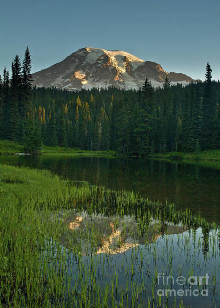 Mount Rainier Photograph - Mount Rainier Dawn Reflection by Mike Reid