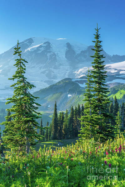 Wall Art - Photograph - Mount Rainier Photography Meadows Of Bliss by Mike Reid