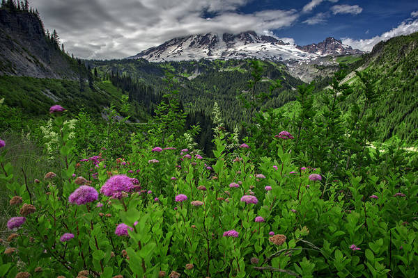 Photograph - Mount Rainier by Rick Berk