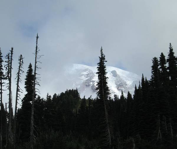 Photograph - Mount Rainier by Tony Mathews