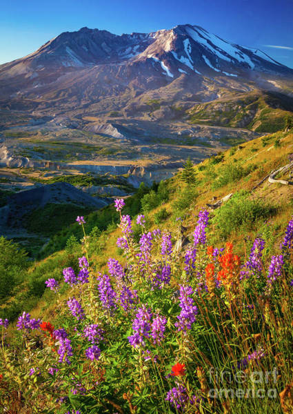 Photograph - Mount Saint Helens Caldera by Inge Johnsson