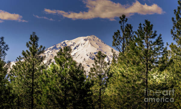 Photograph - Mount Shasta by Blake Webster