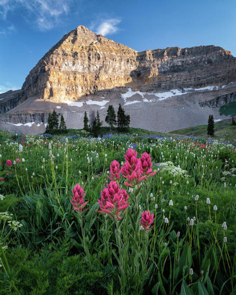 James Photograph - Mount Timpanogos Wildflowers by James Udall