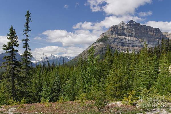 Photograph - Mount Whymper From Vermillion Pass by Charles Kozierok