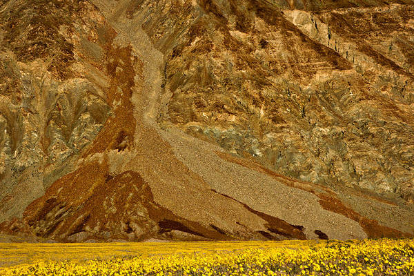 Photograph - Mountain And Wildflowers - Death Valley by Stuart Litoff