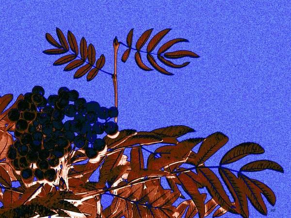 Cheery Digital Art - Mountain Ash Design by Will Borden