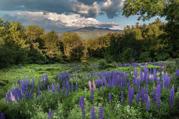 Photograph - Mountain Blooms by Bill Wakeley