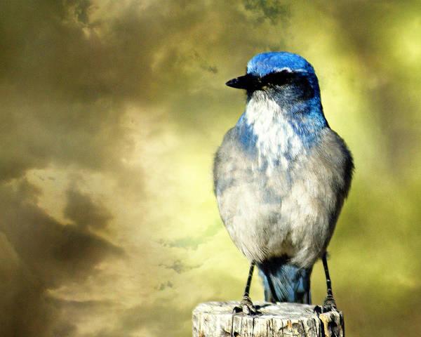 Photograph - Mountain Bluebird by Marty Koch