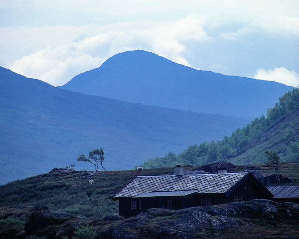 Photograph - Mountain Cabin And Sheep by Kim Lessel