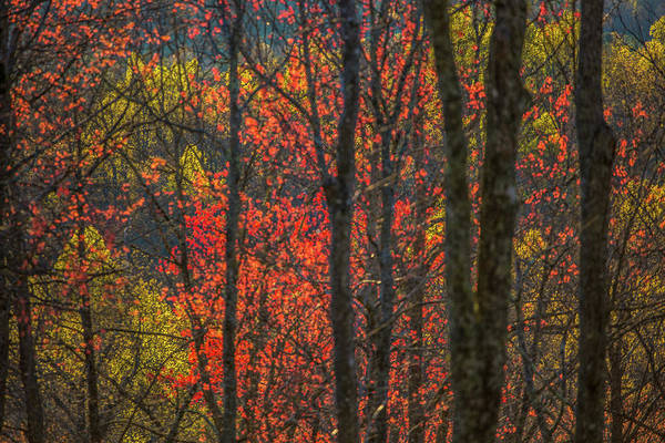 Photograph - Mountain Colors by Donnie Whitaker