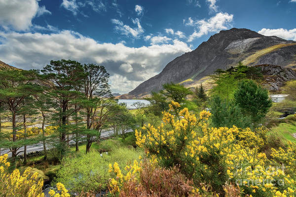 Photograph - Mountain Flora by Adrian Evans