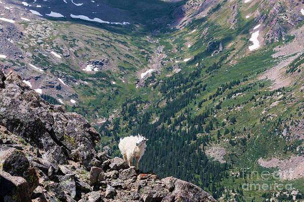 Photograph - Mountain Goat On A Ledge by Steve Krull