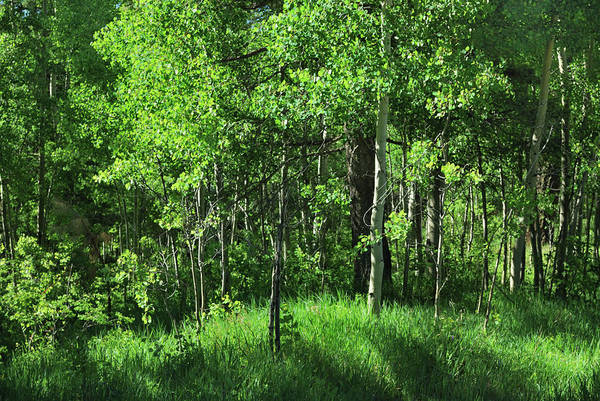 Photograph - Mountain Greenery by Ron Cline