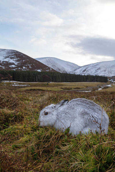 Photograph - Mountain Hare Habitat by Peter Walkden
