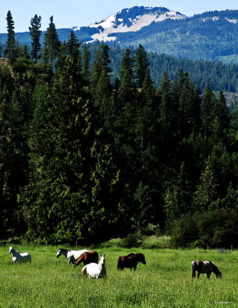 Photograph - Mountain Herd by Joseph Noonan