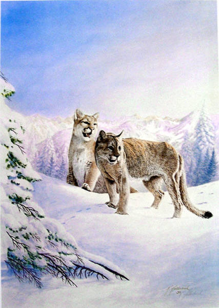Wall Art - Painting - Mountain Lion by Ken Hollerbach