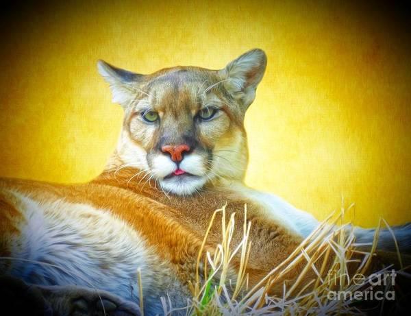 Puma Digital Art - Mountain Lion Two by Suzanne Handel