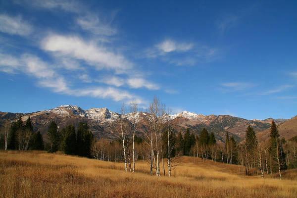 Photograph - Mountain Meadow 24 by Mark Smith