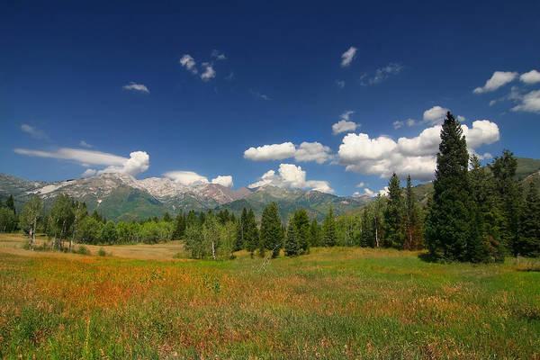 Photograph - Mountain Meadow 35 by Mark Smith
