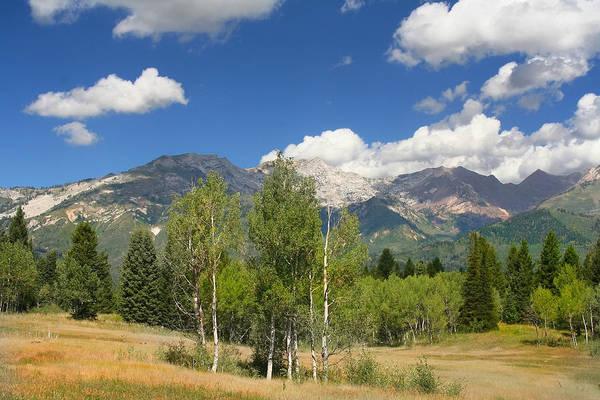 Photograph - Mountain Meadow 67 by Mark Smith