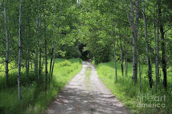 Photograph - Mountain Meadow Road by Carol Groenen