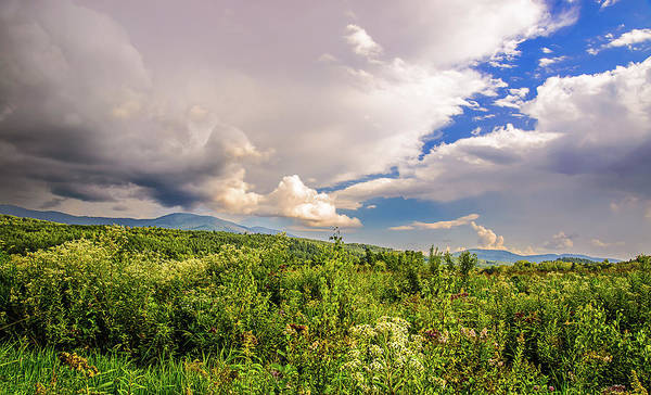 Photograph - Mountain Meadow by Robert Mitchell