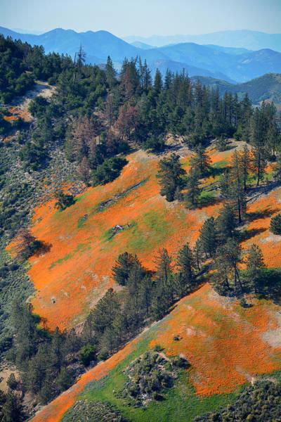 Figueroa Mountain Photograph - Mountain Of Poppies by Kyle Hanson