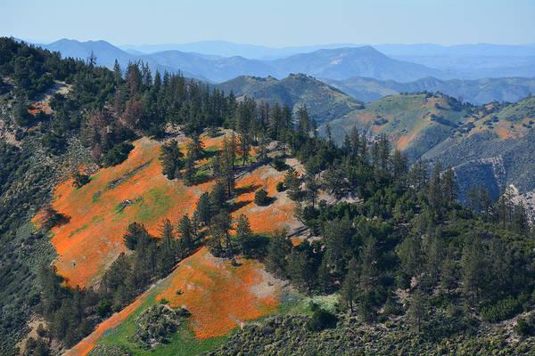 Figueroa Mountain Photograph - Mountain Of Poppies Landscape by Kyle Hanson