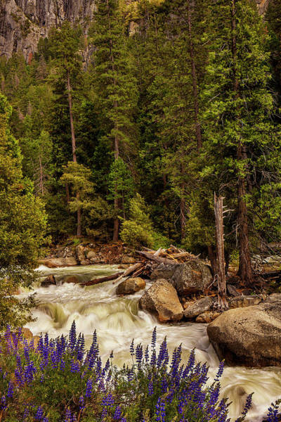 Wall Art - Photograph - Mountain Stream by Andrew Soundarajan
