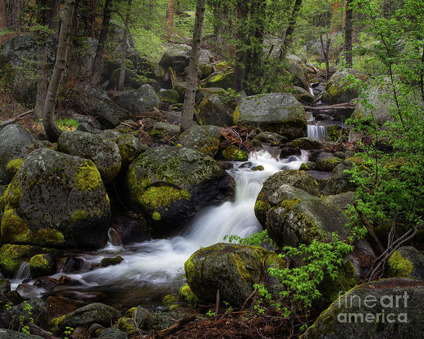 Photograph - Mountain Stream by Anthony Michael Bonafede