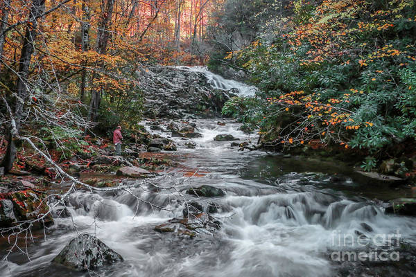 Photograph - Mountain Stream Fishing by Tom Claud