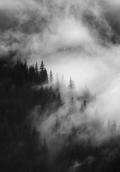 Forest Wall Art - Photograph - Mountain Whispers by Mike  Dawson