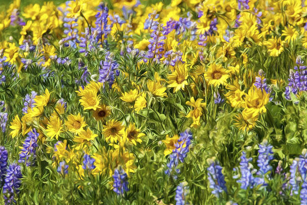 Photograph - Mountain Wild Flowers by Wes and Dotty Weber