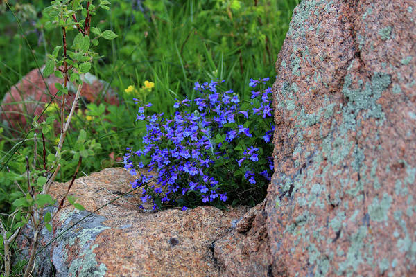 Photograph - Mountain Wildflowers by Shane Bechler