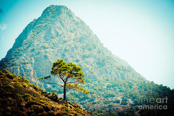 Photograph - Mountain With Pine Artmif.lv by Raimond Klavins