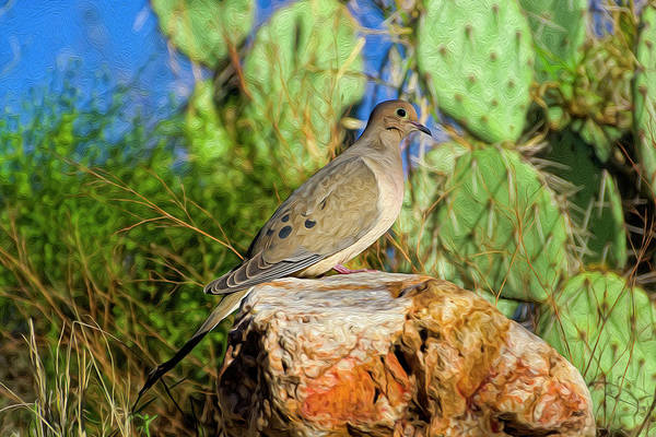 Photograph - Mourning Dove Op2 by Mark Myhaver