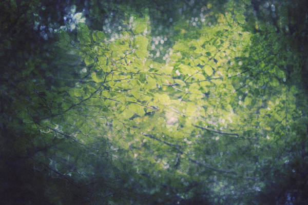 Wall Art - Photograph - In The Leaves by Violet Gray