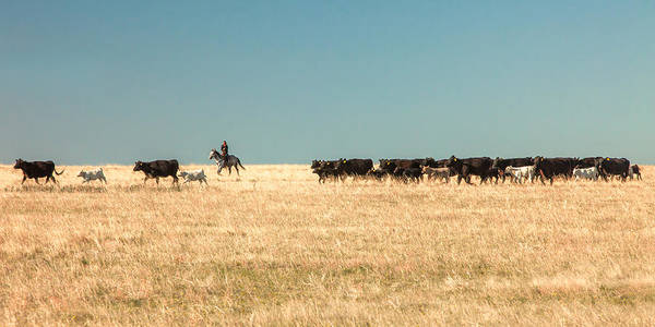Photograph - Moving The Herd by Todd Klassy