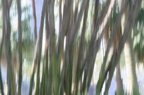 Photograph - Moving Trees 04 by Gene Norris