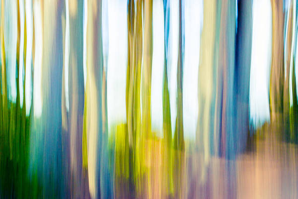 Photograph - Moving Trees I-4 by Gene Norris